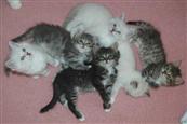 Kittens_a
