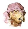 CalvinSchwa's avatar