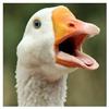 GloriousGoose's avatar