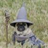 TheTrueDogWizard's avatar