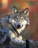 SilverWolf_27's avatar