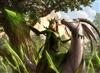 timvanderlinden's avatar