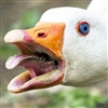 GloriousGoose's avatar
