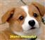 koreandog's avatar